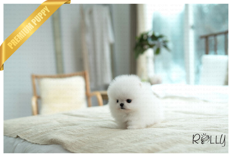 (PURCHASED by Gozalez) COTTON - Pomeranian. M - ROLLY PUPS INC