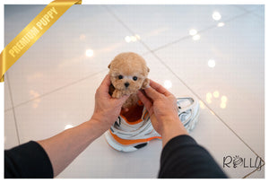 (Purchased by SMEKE) Caramel - Poodle. M - ROLLY PUPS INC