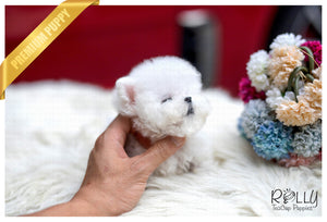 (Purchased by Mantovani) Casper - Poodle. M - ROLLY PUPS INC
