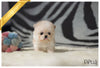 (Purchased by Taylor)Fuzzy - Poodle. M - Rolly Teacup Puppies