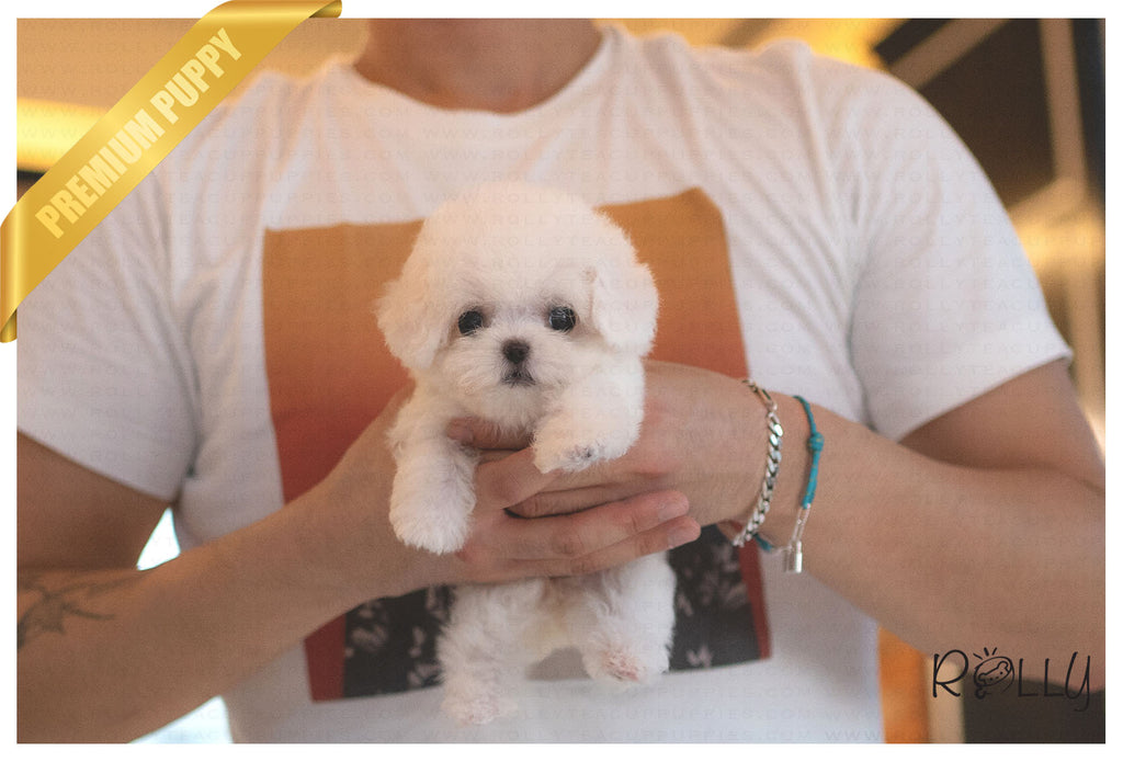 (Purchased by Mohamed) FLUFFY - Bichon Poo. F - ROLLY PUPS INC