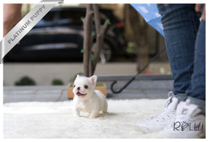 (Purchased by Quintanilla) Fluffy - French Bulldog. M - Rolly Teacup Puppies - Rolly Pups