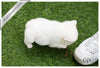 Fluffy - French Bulldog. M