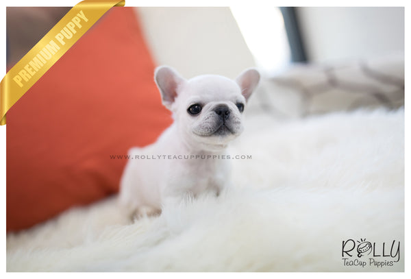 (SOLD to Rodriguez) Mochi - French Bulldog. F - Rolly Teacup Puppies