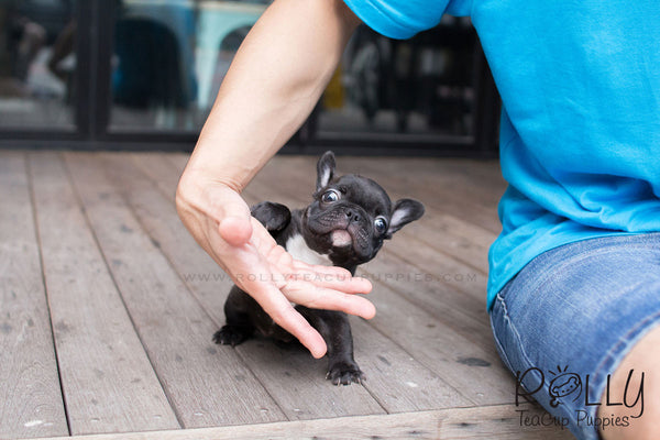 GaGa - French Bulldog