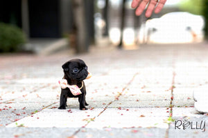 (Purchased by Kobernick) Fudge - Pug. F - Rolly Teacup Puppies
