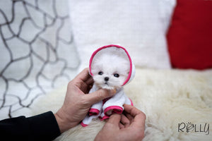 (Purchased by Jasso) Gigi - Maltese. F - Rolly Teacup Puppies