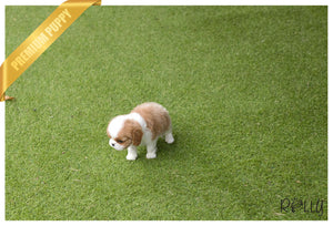 (Purchased by Arie)Hazel - King Charles. F - ROLLY PUPS INC