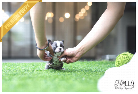 (SOLD to Yogini) Igloo - French. F - Rolly Teacup Puppies