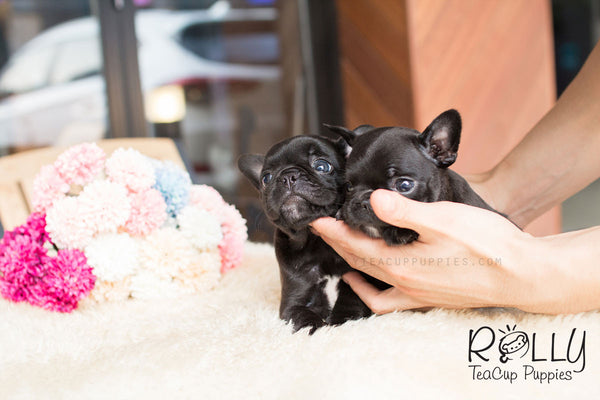 Milly & Jill - French Bulldog