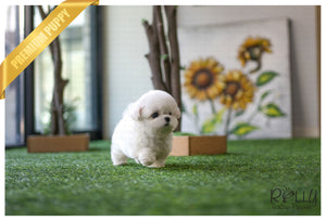 (Purchased by Kim) Leo - Bichon. M - Rolly Teacup Puppies - Rolly Pups
