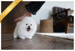 LILY - Pomeranian. F - ROLLY PUPS INC
