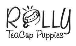 Remaining shipping / Direct - Rolly Teacup Puppies