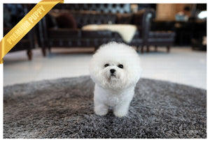 (PURCHASED by Tan) Lucy - Bichon. F - Rolly Teacup Puppies - Rolly Pups