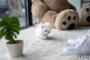 (Purchased by Sam) Luna - Maltese. F - Rolly Teacup Puppies