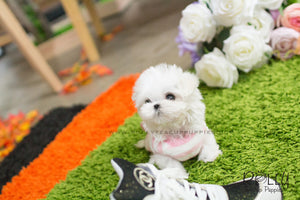 Lizzie - Maltese. F - ROLLY PUPS INC