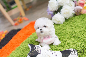 Lizzie - Maltese. F - Rolly Teacup Puppies - Rolly Pups