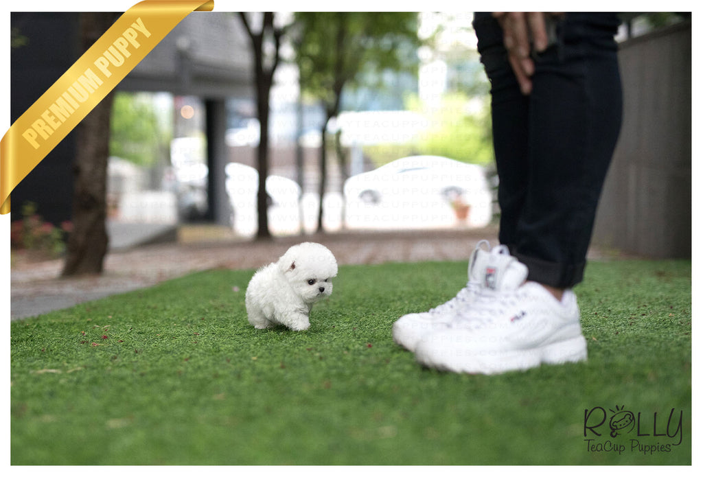 (Purchased by Woo) Popcorn - Bichon. M - ROLLY PUPS INC