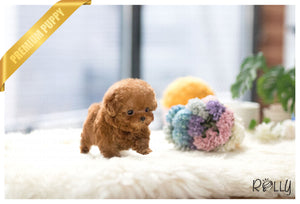 (Purchased by Alvarez) Paris - Poodle. F - Rolly Teacup Puppies