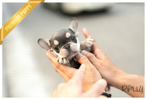 (Purchased by Ellis) Princess - French Bulldog. F - Rolly Teacup Puppies