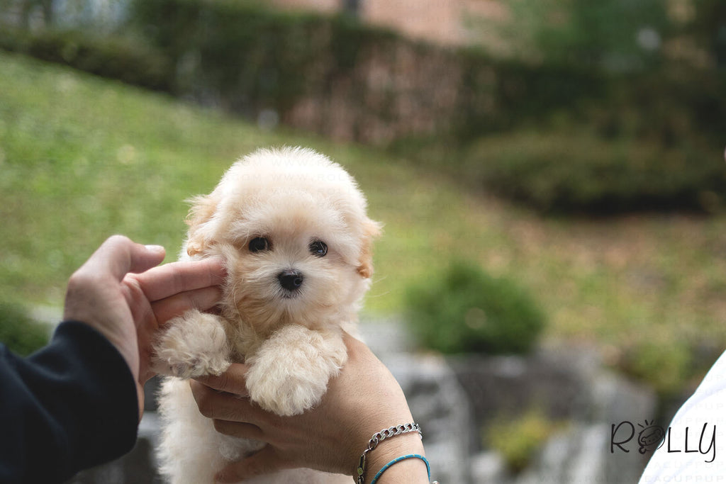 (RESERVED by ANFINSON) PUFF - Coton. F