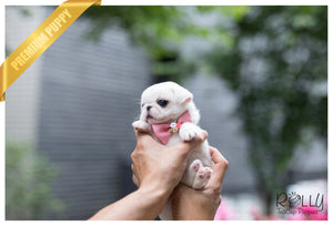 (SOLD to Ahmed) Snow White - Pug. F - Rolly Teacup Puppies