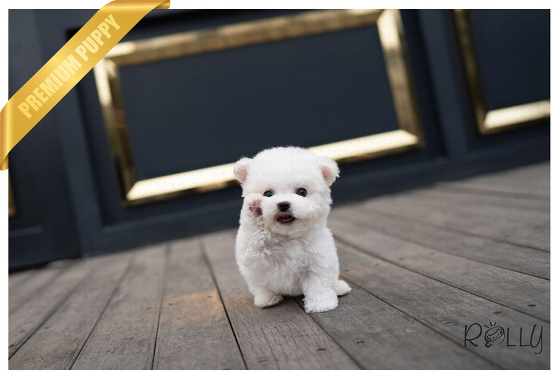 SIERRA - Bichon. F - ROLLY PUPS INC