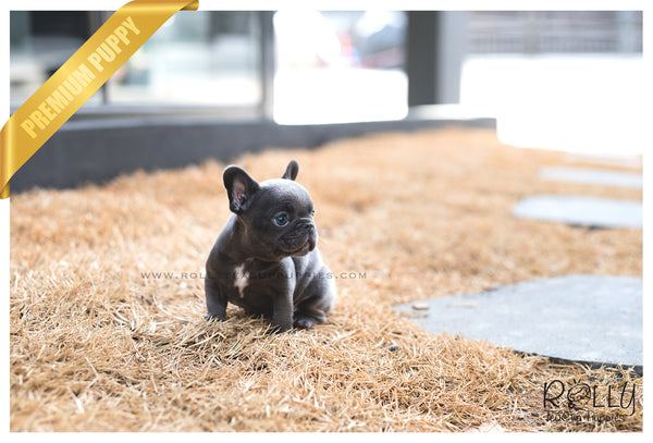Smokey - French Bulldog. M