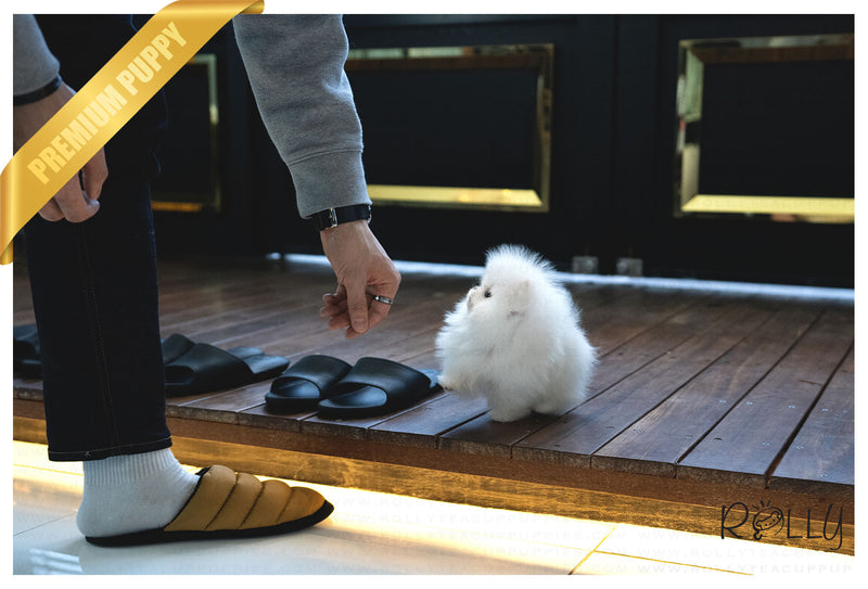 (Purchased by Levine) Tank - Pomeranian. M