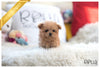 (Purchsed by Shah) Teddy - Poodle. M - Rolly Teacup Puppies