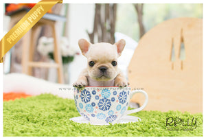 Ben - French Bulldog. M - Rolly Teacup Puppies - Rolly Pups