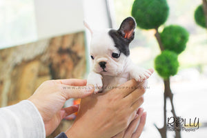Piggie - Frenchie. F - ROLLY PUPS INC