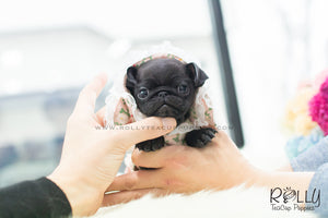 (SOLD to Barrett) Nana - Pug. F - Rolly Teacup Puppies