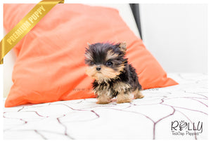 Kylie - Yorkie. F - ROLLY PUPS INC