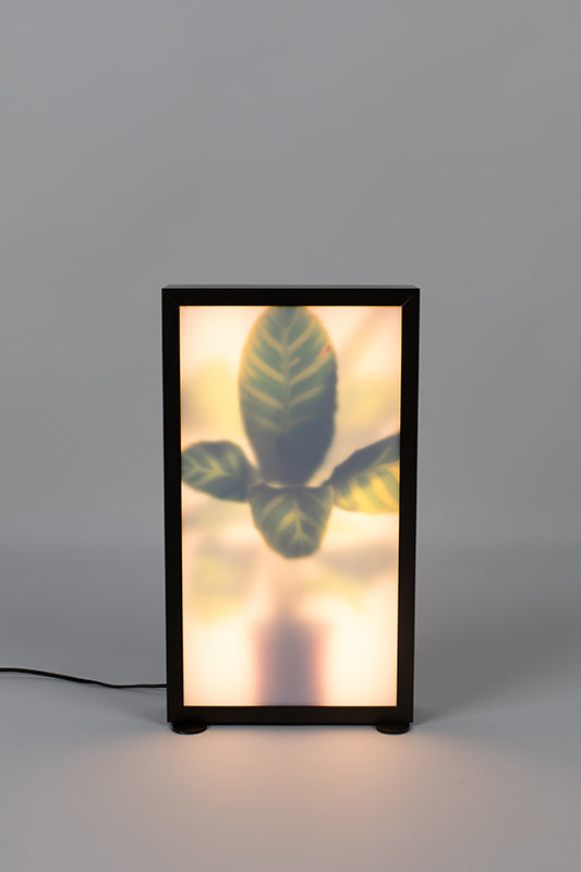 Floor Lamp Grow M
