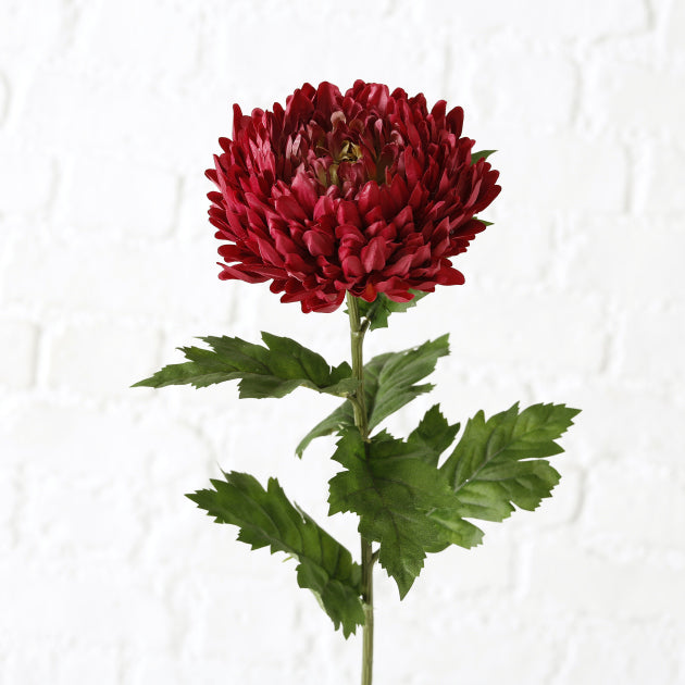 Chrysanthemums Stem Flower