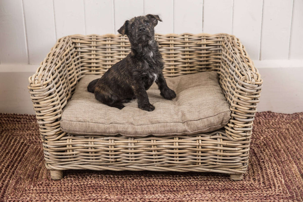 Outstanding Foxford Dog Bed Andrewgaddart Wooden Chair Designs For Living Room Andrewgaddartcom
