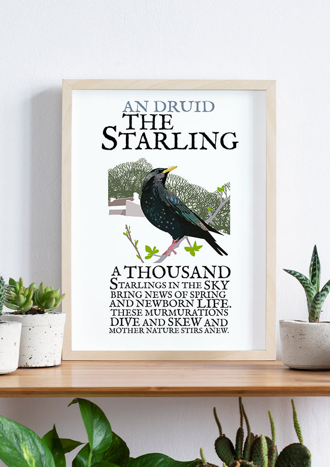 Roger O'Reilly Birds of Ireland - The Starling Print