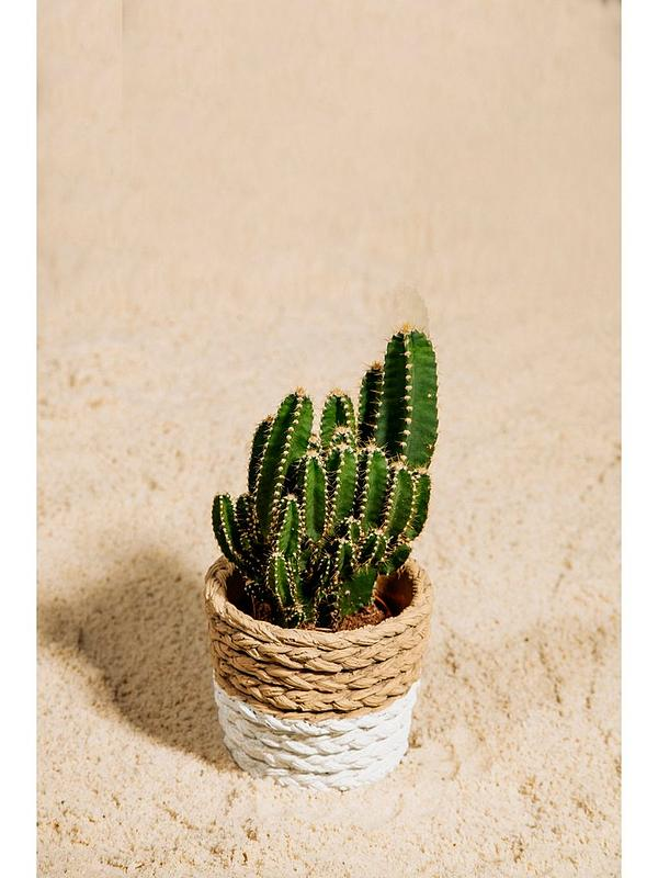 White Dip Cement Basket Planter