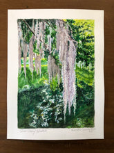 Middleton Place Spanish Moss