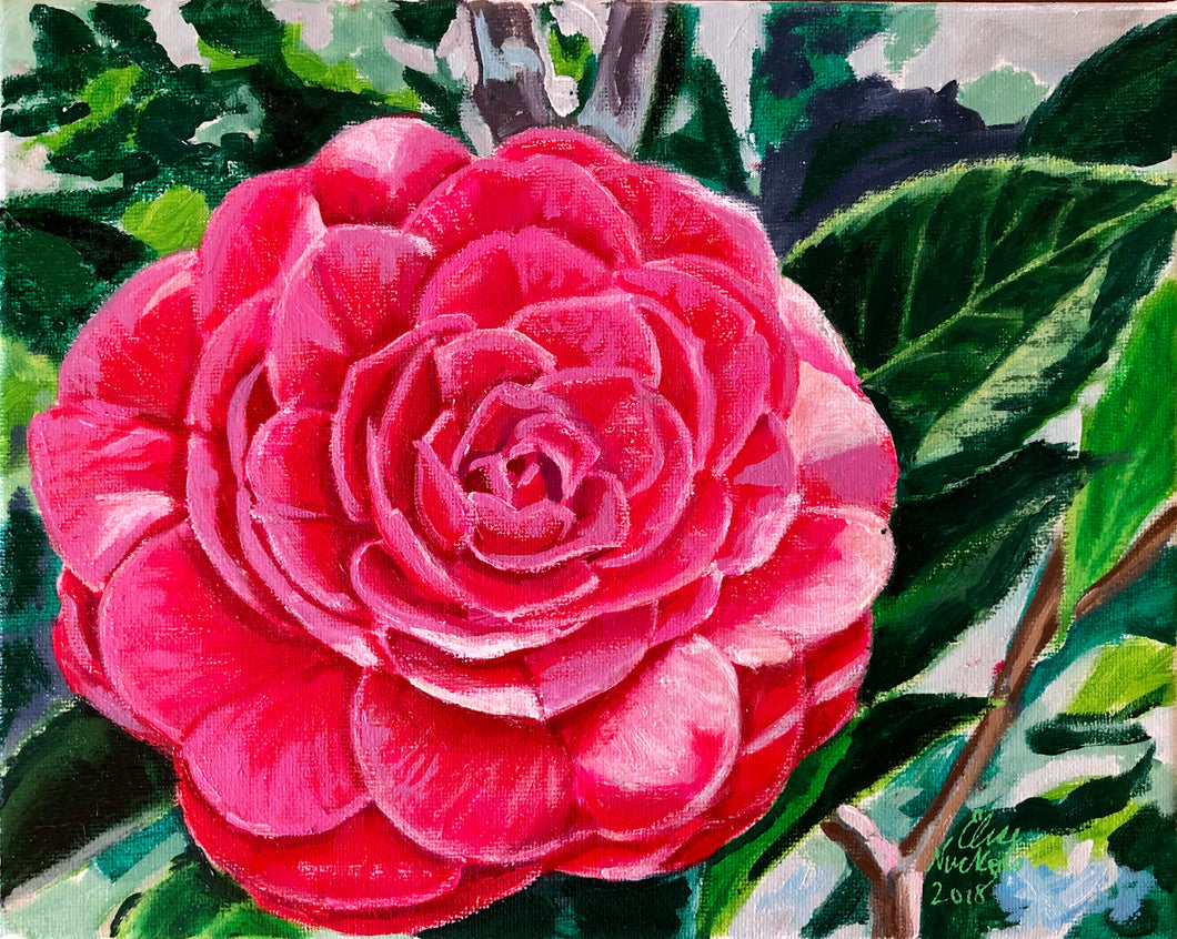 'Red Red Rose' Camellia