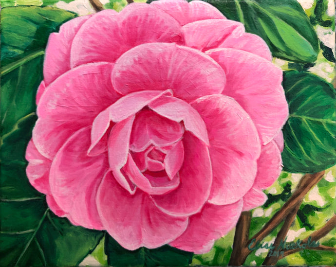 Double Pink Camellia