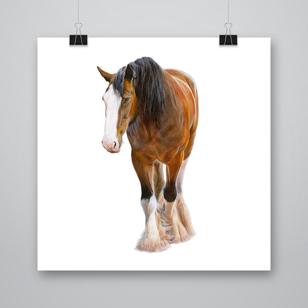 'Angus' Clydesdale Horse Giclee Print - Harebell Designs