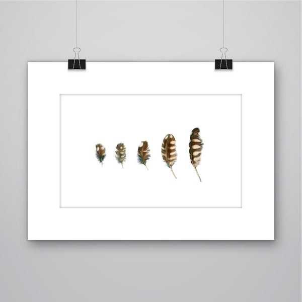 'Quintet' Little Owl Feathers Giclee Print - Harebell Designs