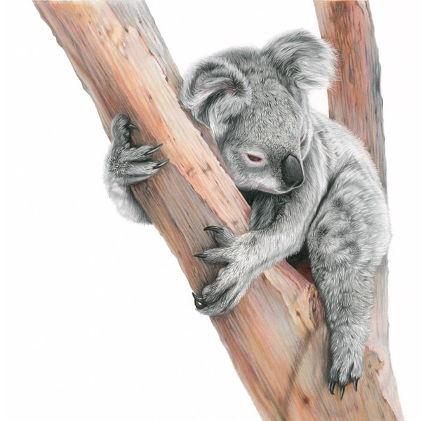 'Sleepy One' Koala Limited Edition Print - Harebell Designs