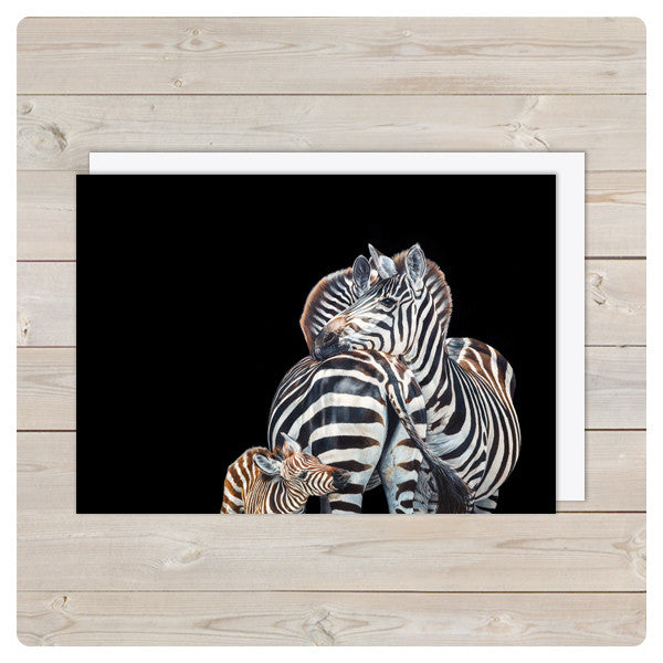 'Zebra Trio' Notecards - Harebell Designs