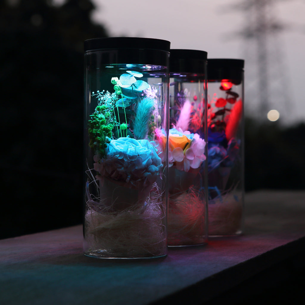 Preserved Real Rose Flower with LED Night Light - MAGICNIGHT