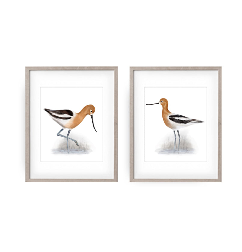 Set of 2 American Avocet Bird Art Prints - Studio Q - Art by Nicky Quartermaine Scott