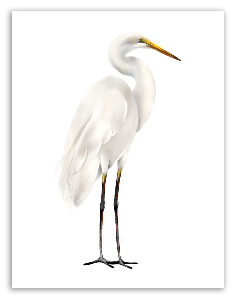 Great Egret Bird Art Print - Studio Q - Art by Nicky Quartermaine Scott