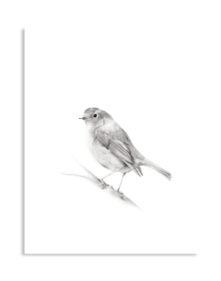 Bird (Robin) Pencil Drawing Print - Studio Q - Art by Nicky Quartermaine Scott
